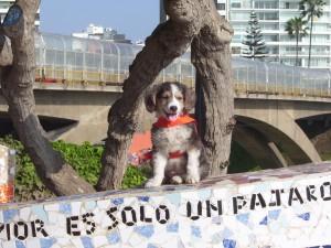 lima and dog